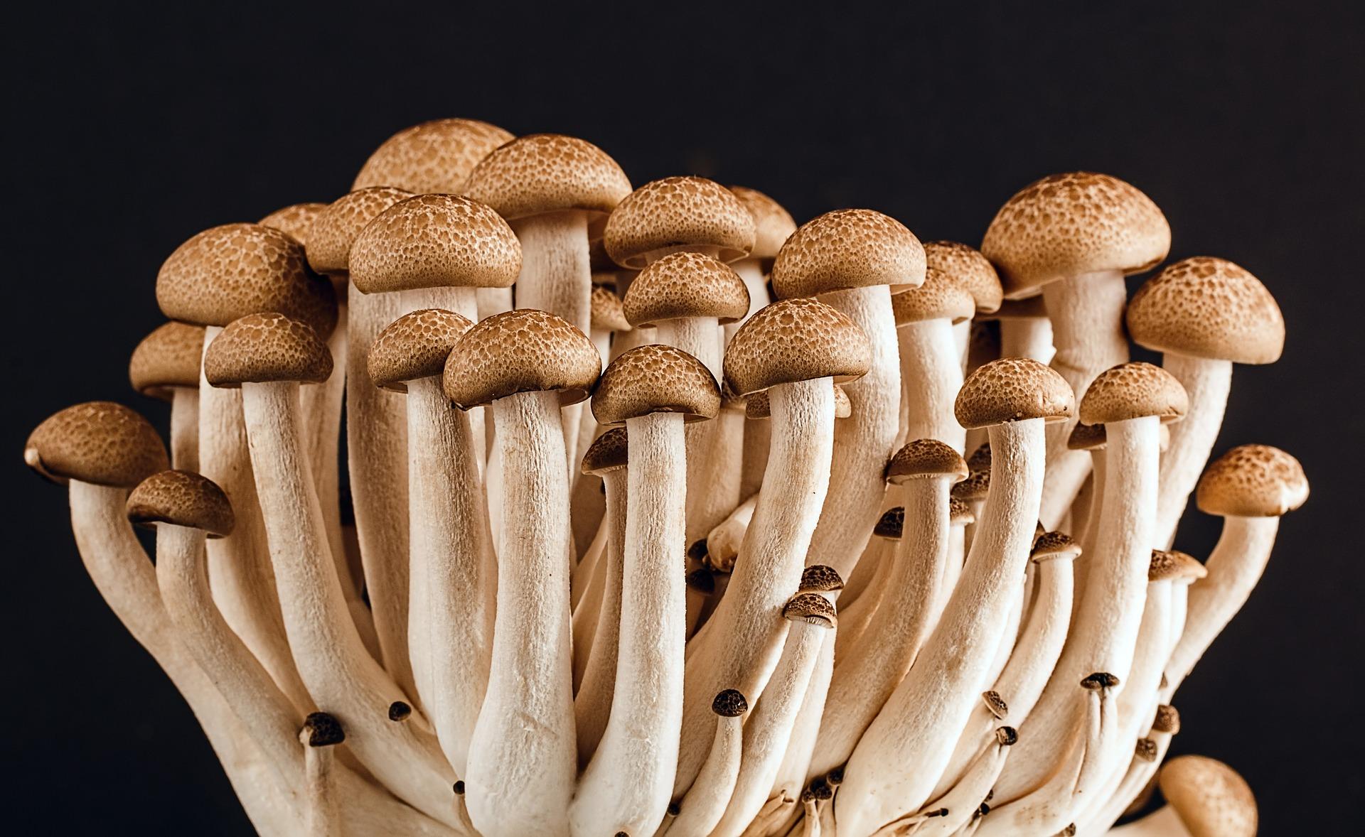 mushroom-389421_1920
