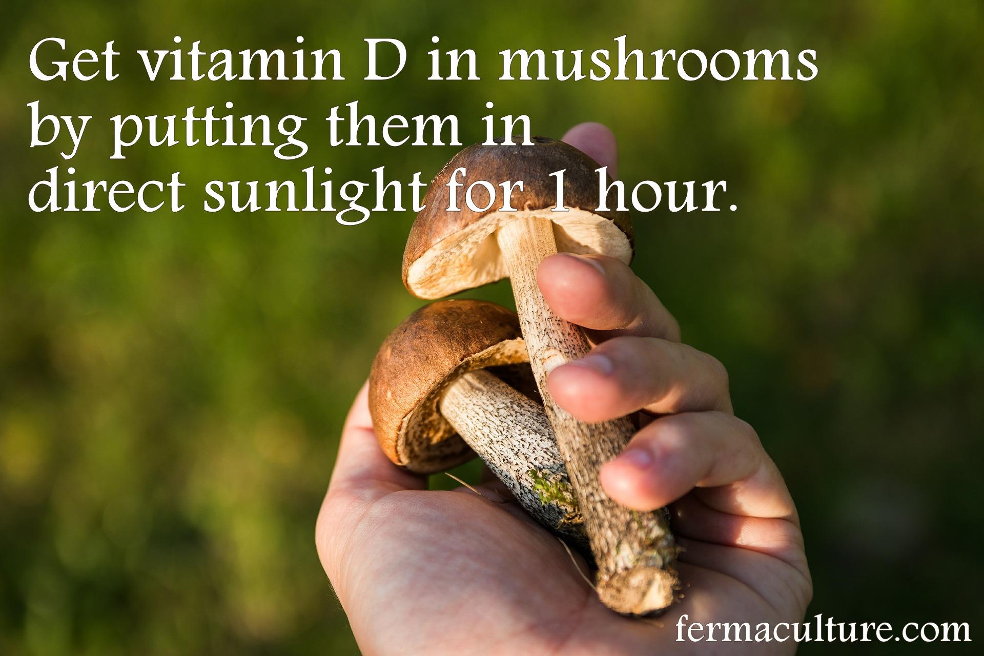 mushrooms-sun
